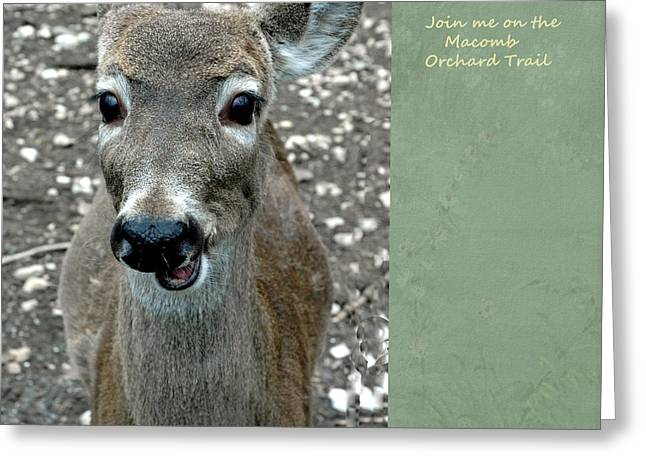 Rudolph Greeting Cards - Join me on the Macomb Orchard Trail Greeting Card by LeeAnn McLaneGoetz McLaneGoetzStudioLLCcom