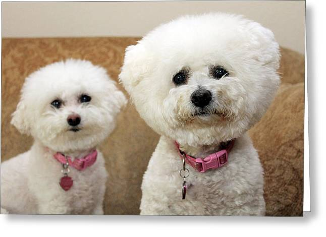 Family Member Greeting Cards - Jolie and Chloe wait for a cookie Greeting Card by Michael Ledray