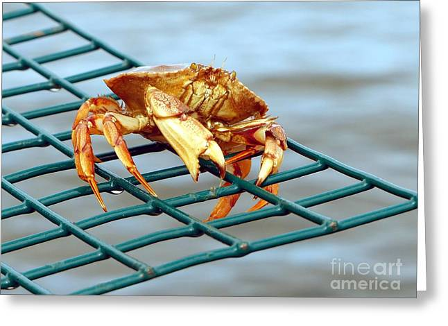 Jonah Photographs Greeting Cards - Jonahs Crab on a Lobster Pot Greeting Card by Christine Stack