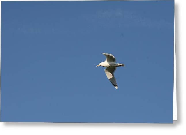 Flying Seagull Greeting Cards - Jonathan Livingston Seagull Greeting Card by Tamsin Maund