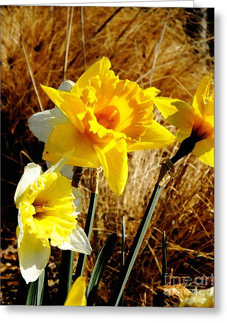 Jonquil I Greeting Card by Jeff McJunkin