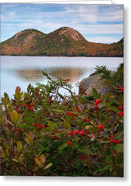 Jordan Pond With Berries Greeting Card by Darylann Leonard Photography