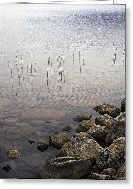 Growing From Rock Greeting Cards - Jordans Pond Greeting Card by Elaine Walsh