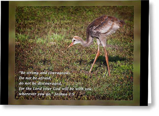 Inspirational Wildlife Prints Greeting Cards - Joshua 1 9 Greeting Card by Dawn Currie