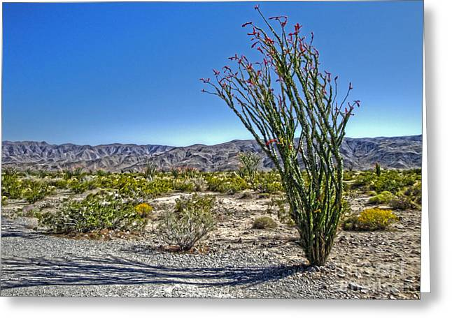 Joshua Tree - 19 Greeting Card by Gregory Dyer