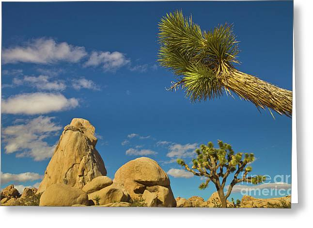 Joshua Tree And Rock And Sky Joshua Greeting Card by