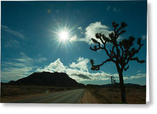 The Trees Greeting Cards - Joshua Tree At The Roadside, Joshua Greeting Card by Panoramic Images
