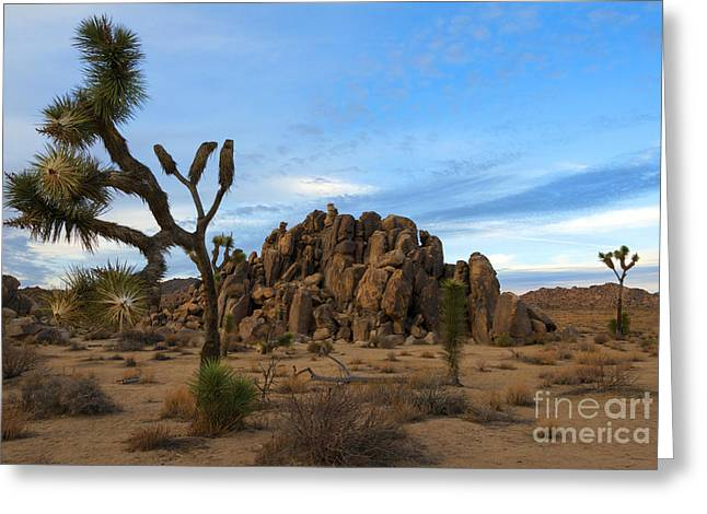 Joshua Tree National Park Greeting Cards - Joshua Tree Cloud Explosion Greeting Card by Mike Dawson