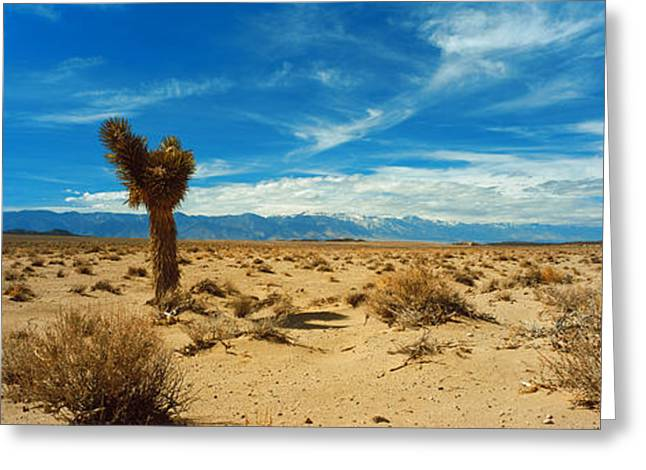 Mojave Desert Greeting Cards - Joshua Tree In A Desert, Mojave Desert Greeting Card by Panoramic Images