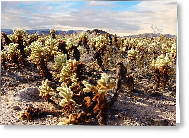 Glenn Mccarthy Art Greeting Cards - Joshua Tree National Park 3 Greeting Card by Glenn McCarthy Art and Photography