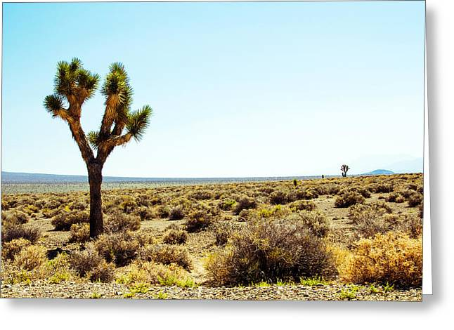 U2 Photographs Greeting Cards - Joshua Tree Greeting Card by Nicholas Blackwell