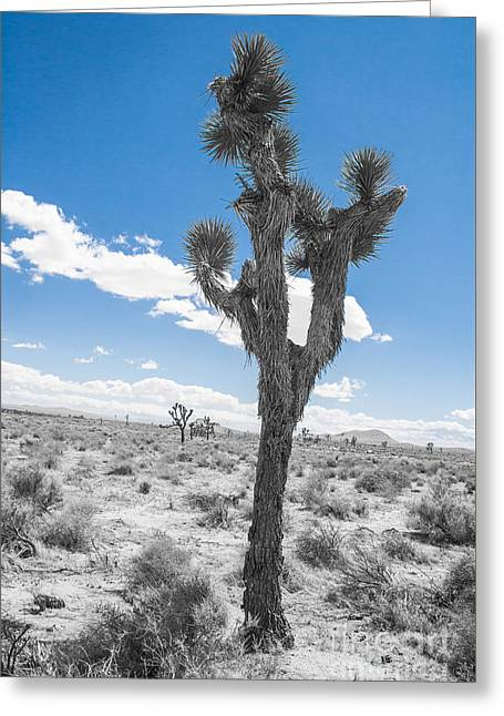 Shower Curtain Greeting Cards - Joshua Tree part1 Greeting Card by  ILONA ANITA TIGGES - GOETZE  ART and Photography