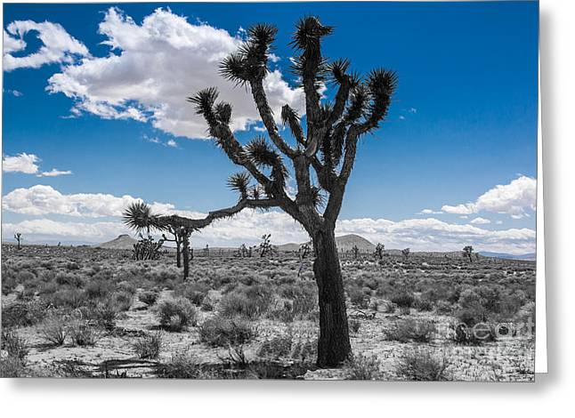 Shower Curtain Greeting Cards - Joshua Tree part2 Greeting Card by  ILONA ANITA TIGGES - GOETZE  ART and Photography