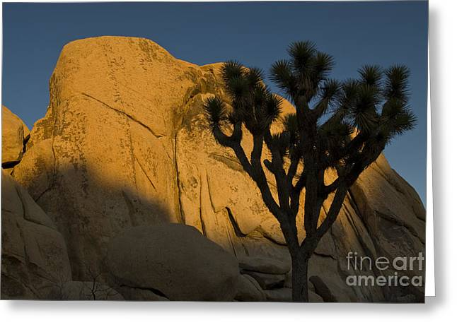 Monolith Greeting Cards - Joshua Tree Silhouette At Sunset Greeting Card by William H. Mullins
