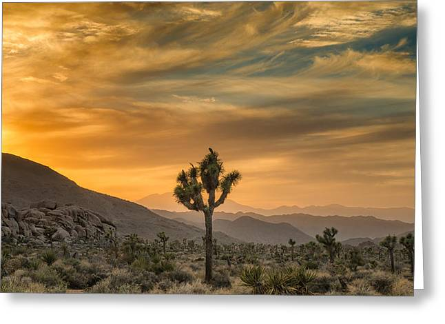 Sunrise Greeting Cards - Joshua Tree Sunrise Greeting Card by Joseph Smith
