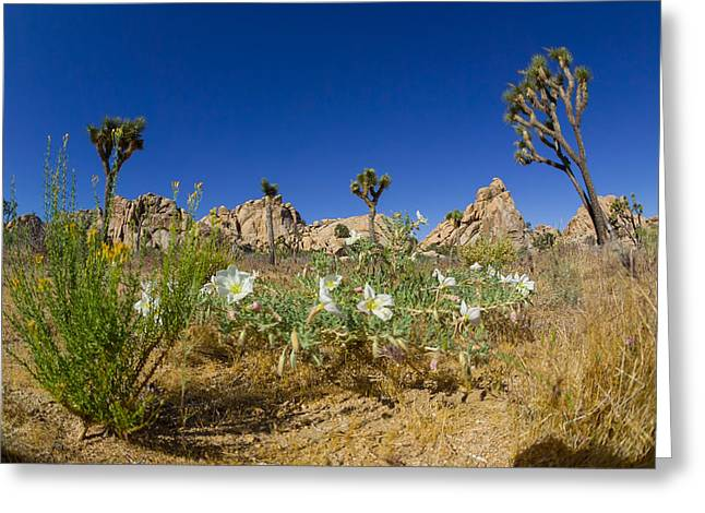 Joshua Trees And Desert Flowers Greeting Card by Scott Campbell