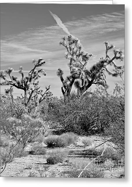 Angeles Forest Greeting Cards - Joshua Trees Greeting Card by Jim Chamberlain