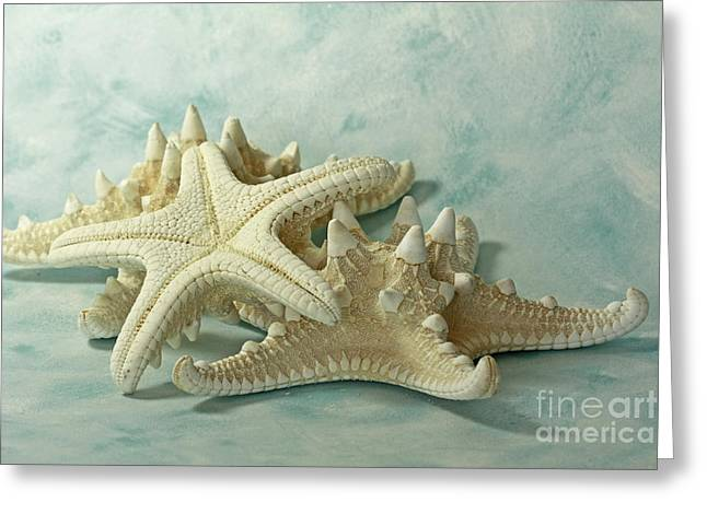 Metal Fish Art Photography Greeting Cards - Journey to the Sea Starfish Greeting Card by Inspired Nature Photography By Shelley Myke
