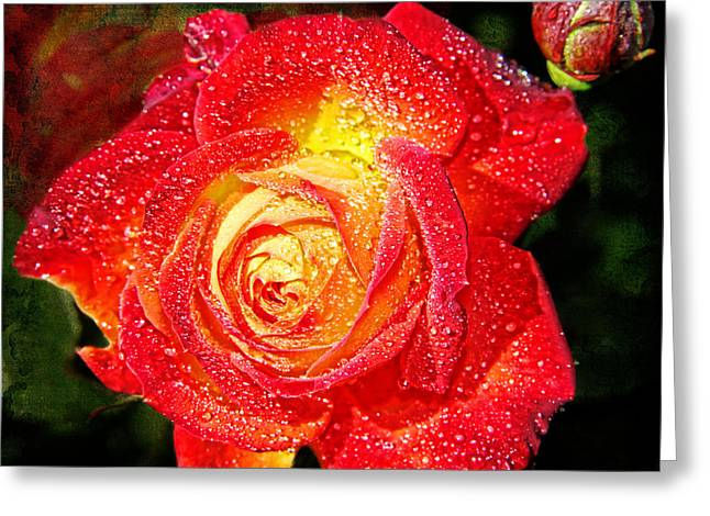 Joyful Rose Greeting Card by Mariola Bitner