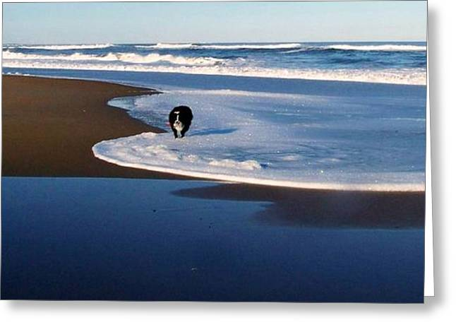 Surfing Art Greeting Cards - JT Plays Along The Shore Too Greeting Card by Eunice Miller