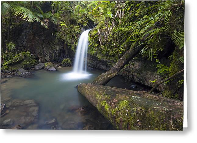 Puerto Rico Greeting Cards - Juan Diego Falls Greeting Card by Patrick Downey