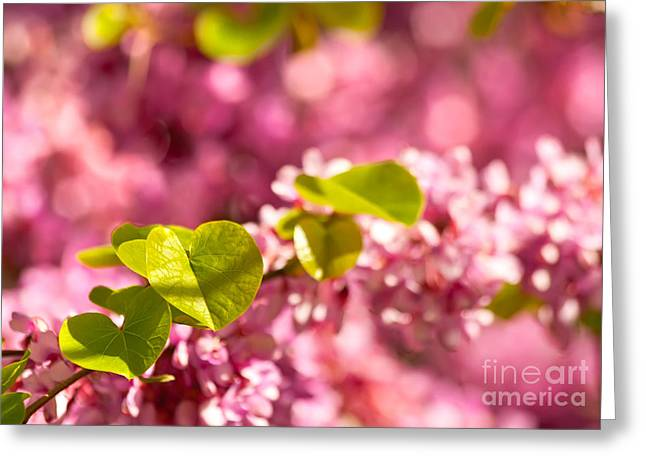 Vibrant Green Greeting Cards - Judas Tree Flower And Leaves Greeting Card by Leyla Ismet