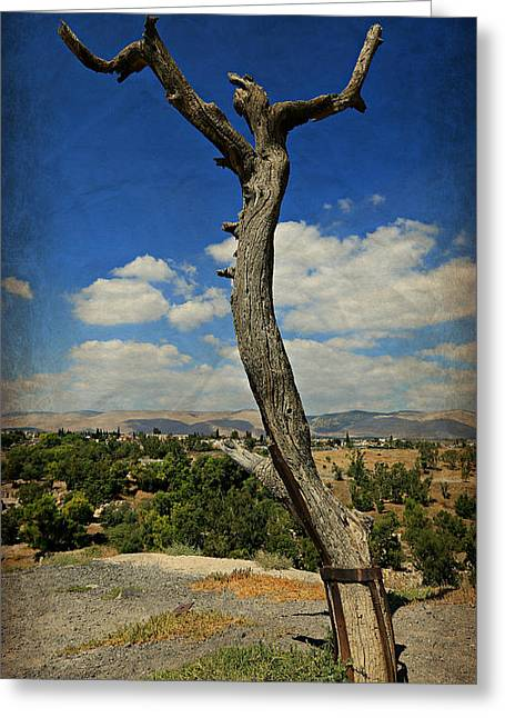Judas Greeting Cards - Judas Tree -- Jesus Christ Superstar  Greeting Card by Stephen Stookey