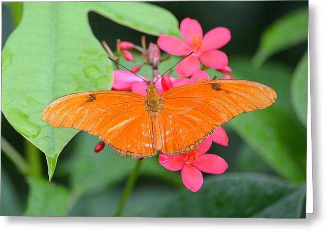 Jacksonville Greeting Cards - Julia Butterfly Greeting Card by Richard Bryce and Family