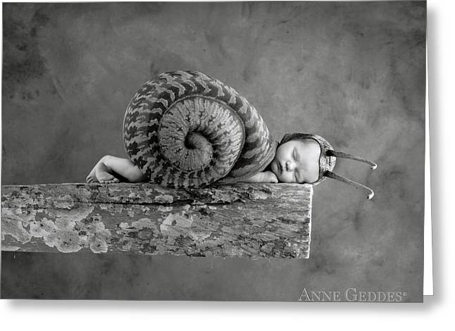 Grey Fine Art Greeting Cards - Julia Snail Greeting Card by Anne Geddes