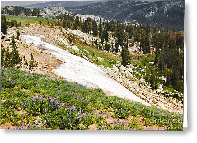 Mountain Valley Greeting Cards - July Snow Greeting Card by Robert Bales