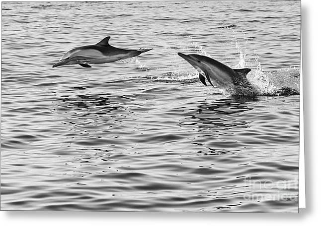 Ocean Mammals Greeting Cards - Jump for joy - Common Dolphins leaping. Greeting Card by Jamie Pham