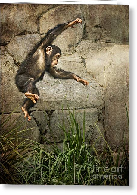 Chimpanzee Greeting Cards - Jump for Joy Greeting Card by Jamie Pham