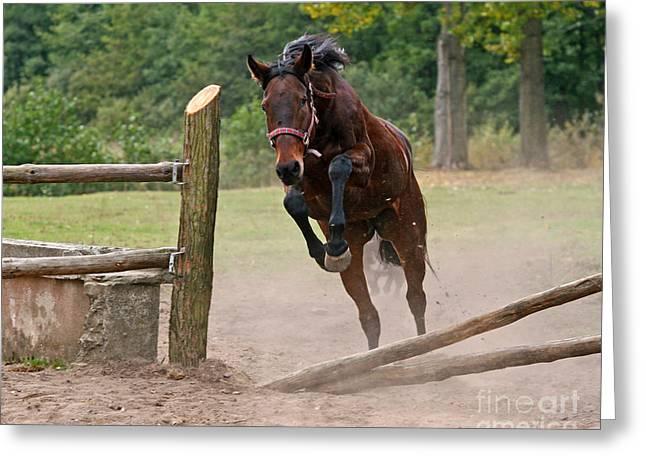 Jump Jump Greeting Card by Angel  Tarantella