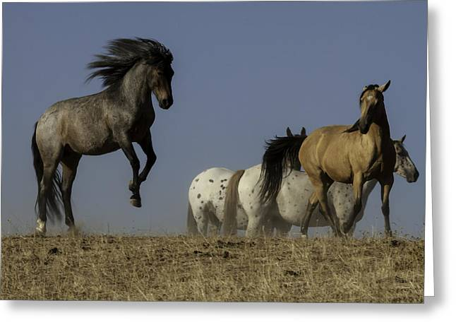 Duchess Greeting Cards - Jumping for Joy Greeting Card by Robert Brownell