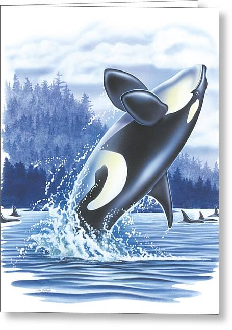 Saltwater Greeting Cards - Jumping Orca Greeting Card by JQ Licensing