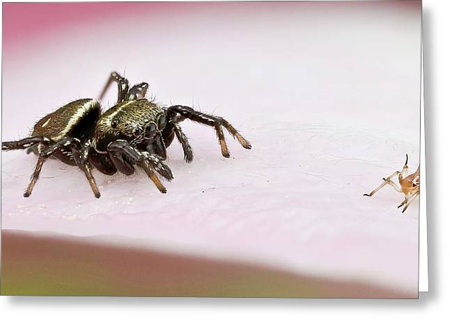 Jumping Spider And Aphid Greeting Card by Nicolas Reusens