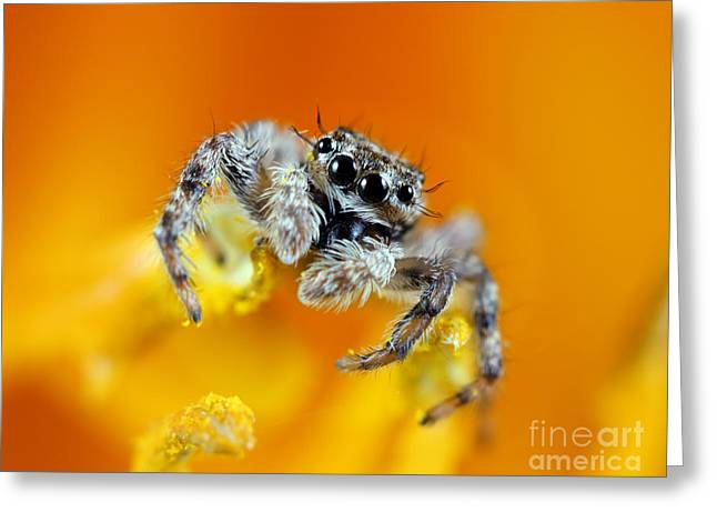 Spider Flower Greeting Cards - Jumping Spider Greeting Card by Brandon Alms