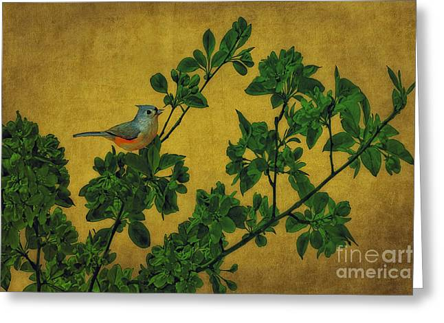 Thomas York Greeting Cards - Junco On A Branch Greeting Card by Tom York Images