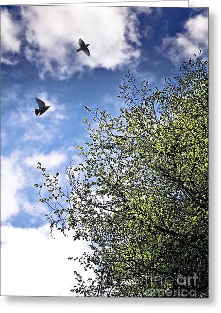 Flying Bird Greeting Cards - June Freedom Greeting Card by Jan Bickerton