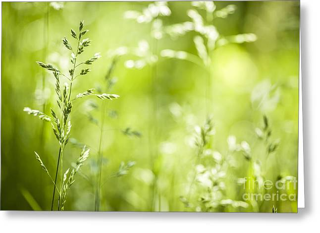 New Life Greeting Cards - June grass flowering Greeting Card by Elena Elisseeva