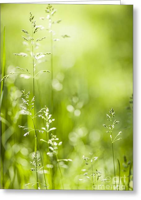 Flowering Greeting Cards - June green grass  Greeting Card by Elena Elisseeva
