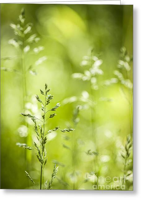 Fresh Green Greeting Cards - June green grass flowering Greeting Card by Elena Elisseeva
