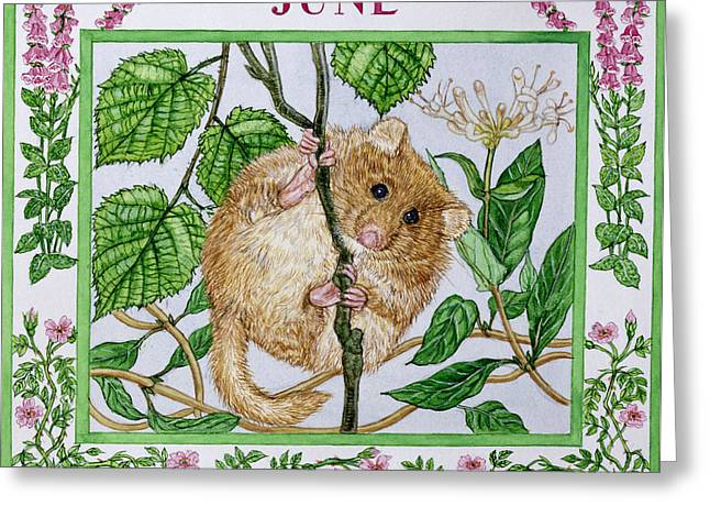 Dormouse Greeting Cards - June Wc On Paper Greeting Card by Catherine Bradbury