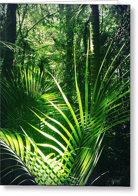 Tropical Photographs Greeting Cards - Jungle fern Greeting Card by Les Cunliffe