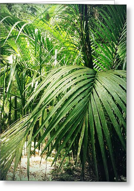 Raining Greeting Cards - Jungle foliage Greeting Card by Les Cunliffe
