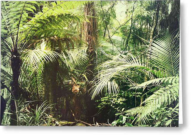 Tropical Photographs Greeting Cards - Jungle green Greeting Card by Les Cunliffe