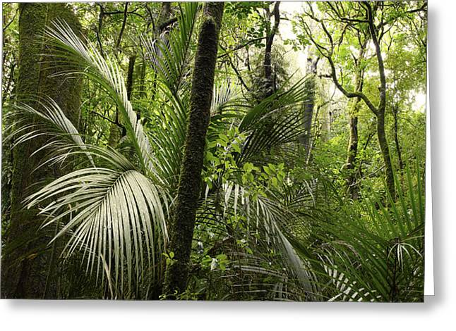 Tropical Photographs Greeting Cards - Jungle greenery Greeting Card by Les Cunliffe