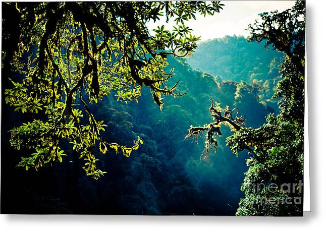 Tibetan Greeting Cards - Jungle in NEPAL Greeting Card by Raimond Klavins