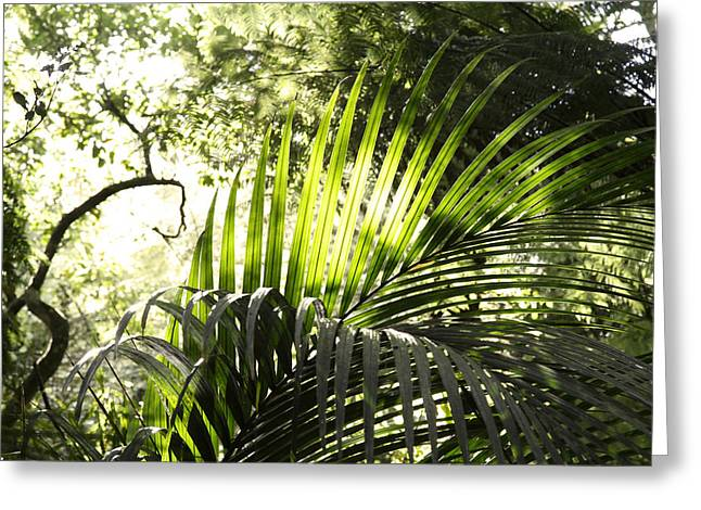 Fresh Green Greeting Cards - Jungle light Greeting Card by Les Cunliffe