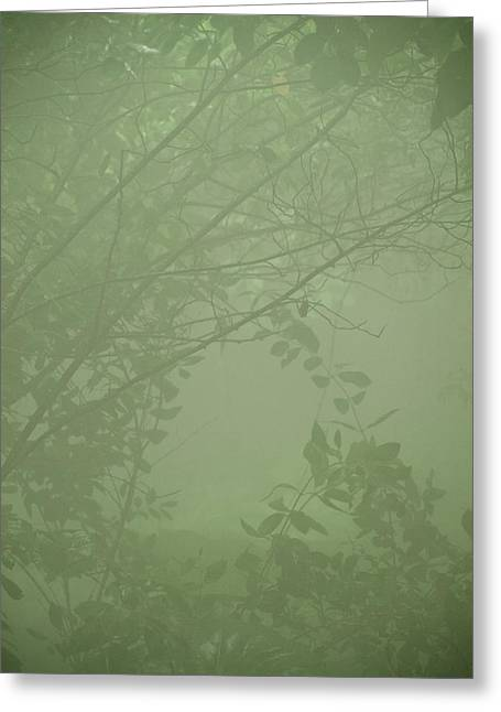 Haze Greeting Cards - Jungle Mist Greeting Card by Shannon Workman